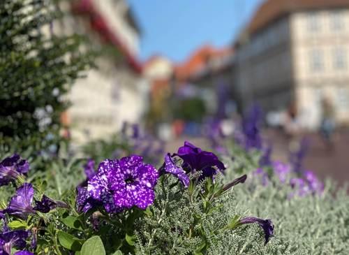 Blumen in Uelzen (c) AHA